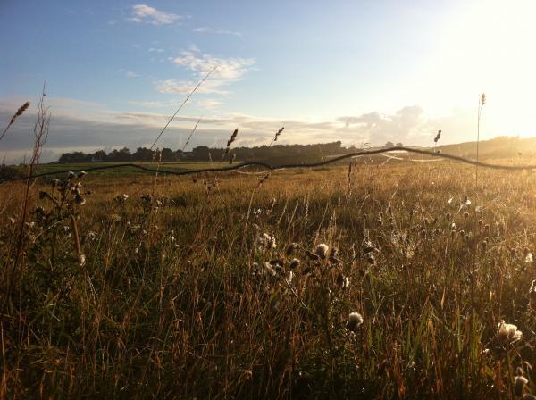 ligne d'horizon (au lever du jour sur les champs à Bédex...)