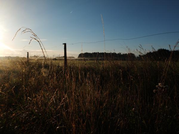 ligne d'horizon 2  | lever du jour sur les champs à Bédex...